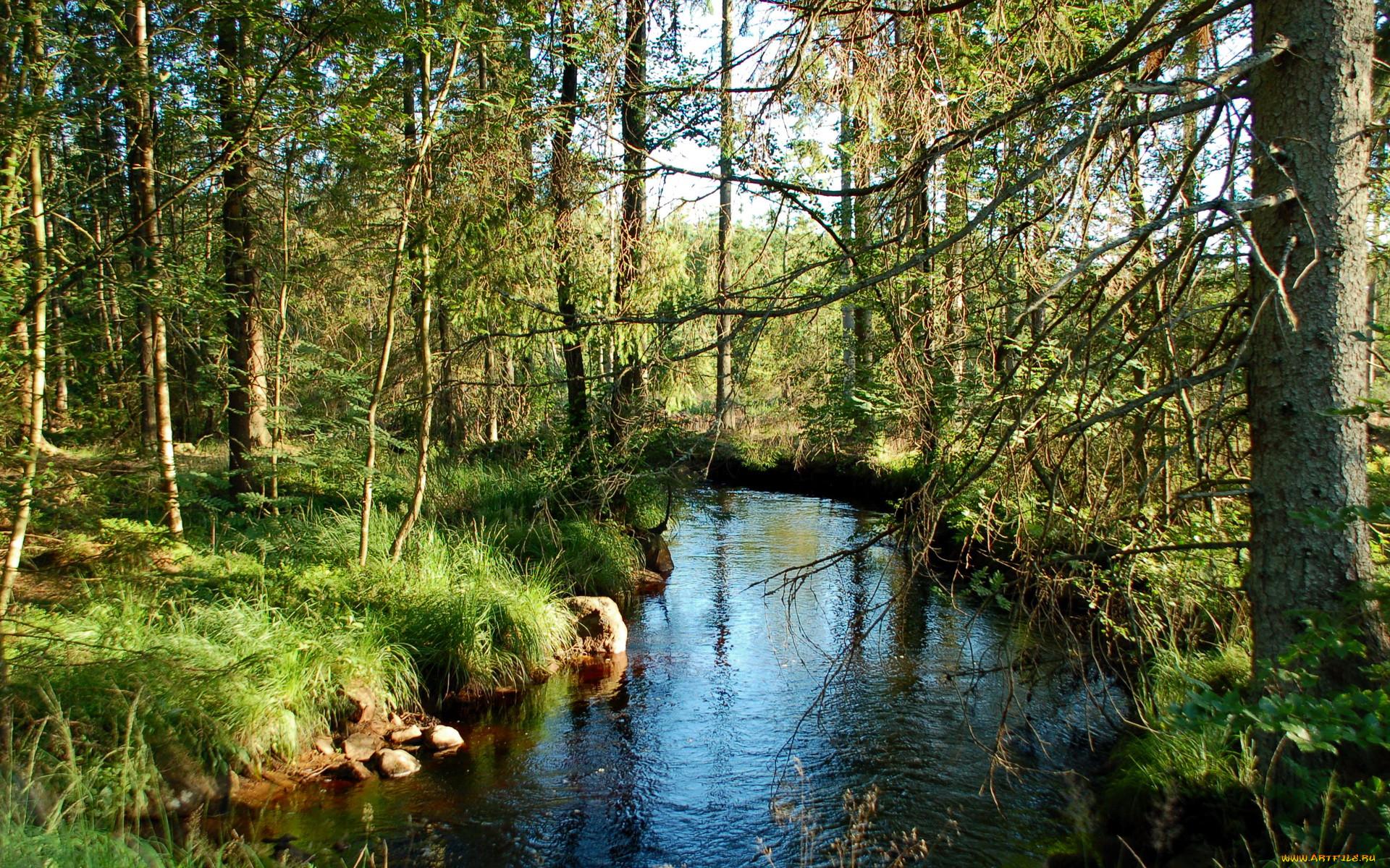 Лес и реки картинки